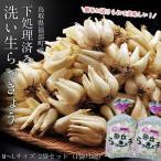 『洗い生らっきょう』 鳥取県福部町産 Lサイズ 1kg ※冷蔵 ○