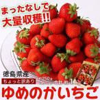 徳島県産 ちょっと訳あり 山盛り ゆめのかいちご 小さめ 約250g×4パック 合計約1kg イチゴ  ※冷蔵 frt ○