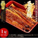 鹿児島産 うなぎ蒲焼「五匠鰻」約100〜120g×1尾  ※冷凍