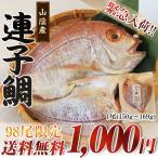 山陰産 連子鯛(キダイ) 1尾150g?169g  送料無料