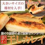 鰈魚 - 脂のり抜群の身と濃厚なエンガワの『訳あり 干しカレイ』 大きいサイズの端材を入手!! 約1kg ※冷凍 sea ○