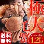 ≪送料無料≫北海道産 極大 「毛蟹」 1尾×1.2kg以上 ※冷凍 sea ☆