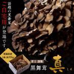新潟県産 黒舞茸『真』 ご家庭用 約700g ※冷蔵