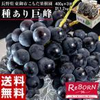 ぶどう ブドウ 葡萄 巨峰 長野県 東御こもだ果樹園 種あり巨峰 約400g×3房 約1.2kg 送料無料