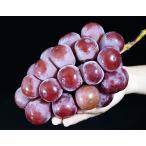 ぶどう ブドウ 葡萄 長野県 東御こもだ果樹園 完熟 クイーンニーナ 各約600g×2房 約1.2kg 送料無料 冷蔵