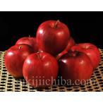 百年の樹齢を重ねる『昔ながらの紅玉』青森県産りんご 約2.5kg(12〜20玉)