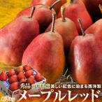 洋ナシ 洋梨 洋なし 紅色に染まる西洋梨 メープルレッド 山形県産 7〜13玉 約3kg 送料無料