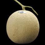 静岡産『クラウンメロン』 1玉 約1.5キロ 送料無料