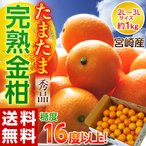 宮崎産 糖度16度以上!完熟金柑「たまたま」L〜2L 約1kg 秀品 frt○