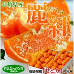 柑橘 長崎県産 JA長崎せいひ 麗紅 バラ詰 約2.5kg×2箱 2S〜L (1箱:目安として15〜26玉) 送料無料