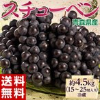葡萄 ぶどう ブドウ青森県産 黒ぶどう スチューベン 約4.5kg 15〜25房 送料無料 冷蔵