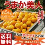送料無料 佐賀県産みかんJAからつ うまか美人 超小粒(2S〜3S)約5kg