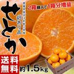 柑橘类 - 柑橘 みかん 和歌山または愛媛県産 訳あり せとか サイズ不指定 約2kg 送料無料