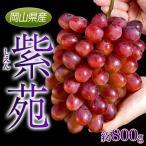 岡山県産 赤ぶどう「紫苑(しえん)」大房 約800g ※常温 frt ☆