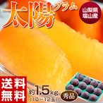 送料無料 山梨県産 太陽プラム 秀品 10〜12玉 約1.5kg 化粧箱 ※冷蔵