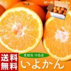 柑橘 - ≪送料無料≫2箱買ったら1箱増量!愛媛県中島町産『いよかん』約3kg M〜4Lサイズ frt ○