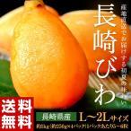 長崎県産 露地栽培 長崎びわ L〜2L 約1kg(250g×4パック) 青秀品 送料無料