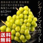 葡萄 ぶどう ブドウ 長野県産 飯塚さんのシャインマスカット 約1.5キロ (2〜4房) 冷蔵 送料無料 産地直送 贈答 ギフ ト高級