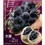 長野県産 大粒ぶどう「ブラックビート」 大房2房 合計1.1kg ※常温または冷蔵 送料無料