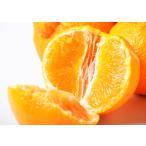 柑橘 和歌山県有田産 大玉「デコポン」約2キロ(目安として6〜8玉) ※常温・送料無料 ☆