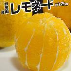 《送料無料》柑橘 静岡県産 「レモネード」 約1.2kg 2S〜2Lサイズ ※常温 frt〇