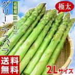 ≪送料無料≫北海道・名寄産 『グリーンアスパラガス』2Lサイズ 露地栽培品・約1kg(目安として20〜30本) ※冷蔵 ○