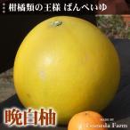 晩白柚-大玉1個