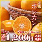 ポンカン2kg(訳有り・大小サイズ込)2箱購入で1箱おまけ!wp2【送料無料】