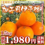 柑橘 - (加工伊予15) 加工用伊予柑15kg(加工用山採り粗選果、サイズS〜2L込)(送料無料)