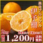 (iyo 02) 伊予柑 2kg  2箱購入で1箱おまけ!(多少の葉傷・黒点が含まれます)(S〜2Lサイズ)(基本送料無料)(セール)みかん