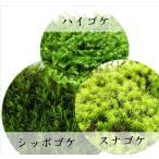 苔ミニパック12cm×19cm×4cm 3個セット(ハイゴケ、スナゴケ、シッポゴケ)