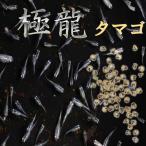 【送料無料】プレミアム メダカ 幹之 極龍血統 卵 30粒 めだか 目高 たまご タマゴ 繁殖 水草 産卵 飼育 種類