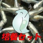 【送料無料】タマミジンコ培養セット みじんこ ミジンコ えさ エサ 餌 活餌 生餌 生きエサ 熱帯魚 めだか メダカ 目高