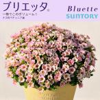 サントリーフラワーズ SUNTORY FLOWERS ブリエッタ 全3色 小輪ペチュニア3号ポット苗
