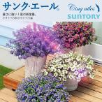 サンク・エール  全4色(スケボラ3.5号ポット苗) サントリーフラワーズ(SUNTORY FLOWERS)