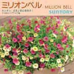 おまとめ買いクーポン対象商品 サントリーフラワーズ SUNTORY FLOWERS ミリオンベル 全15色 カリブラコア3号ポット苗