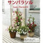 草花の苗 マンデビラ サンパラソルスカーレット3号ポット