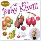 果樹苗  ベビーキウイ( Baby Kiwi) 4品種(サルナシ3号〜3.5号ポット苗)皮ごと全部食べられます♪かわいいミニキウイ さるなし