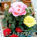 uekibachi_117-housekibako-miniaturerose
