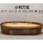 植木鉢 陶器 常滑焼  【鴻陽陶園】小判万宝盆栽鉢(18号_生子)