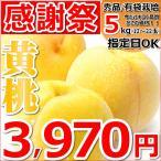 【日頃の感謝の気持ちを込めて!】桃 黄桃 5kg 秀品 有袋栽培 約12玉〜22玉入り もも 山形県産 お取り寄せ