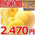 【日頃の感謝の気持ちを込めて!】桃 黄桃 2kg 秀品 有袋栽培 約5玉〜9玉入り もも 山形県産 お取り寄せ