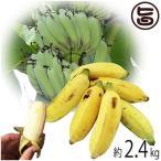 今が旬 沖縄県産 銀バナナ 約2.4kg Banana Party 甘みが強くほどよい酸味 自然本来の味の無農薬国産バナナ 送料無料