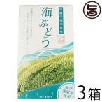 海ぶどう 120g×3箱 グローアップコーポレーションF 海洋深層水使用 海藻 うみぶどう 沖縄 土産 定番 人気  送料無料