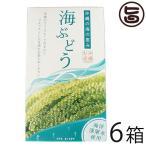 海ぶどう 120g×6箱 グローアップコーポレーションF 海洋深層水使用 海藻 うみぶどう 沖縄 土産 定番 人気  送料無料