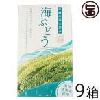 海ぶどう 120g×9箱 グローアップコーポレーションF 海洋深層水使用 海藻 うみぶどう 沖縄 土産 定番 人気  送料無料
