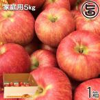 サンつがる 家庭用 5kg(12-18玉) 丘の上ファーム原農園 長野県 信州 人気 りんご 果物 美味しさを重視した 無袋栽培 条件付き送料無料