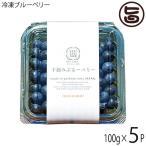 冷凍ブルーベリー100g×5P 無農薬栽培 安心 安全  条件付き送料無料