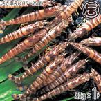 期間限定 久米島の活き車えび 500g(15〜27尾)×1P 送料無料 沖縄 人気 ギフト 希少 車海老