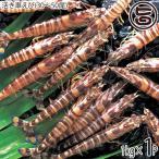 久米島の活き車えび 1kg(30〜55尾)×1P 送料無料 沖縄 人気 ギフト 希少 鮮度抜群 車海老
